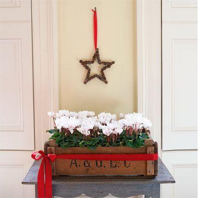 cyclamen and star: Good Ideas, Christmas Decor Ideas, Christmas Style, Christmas Home, Decoration, Christmas Flowers Crates, Christmas Decorating Ideas, Christmas Ideas, Home Style