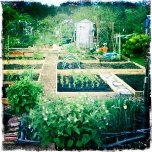 Down the plot. My allotment 18a. craftygardenhoe
