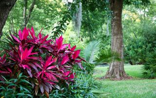 10 images about plants zone 9 on pinterest gardens for Landscape plants of the southeast