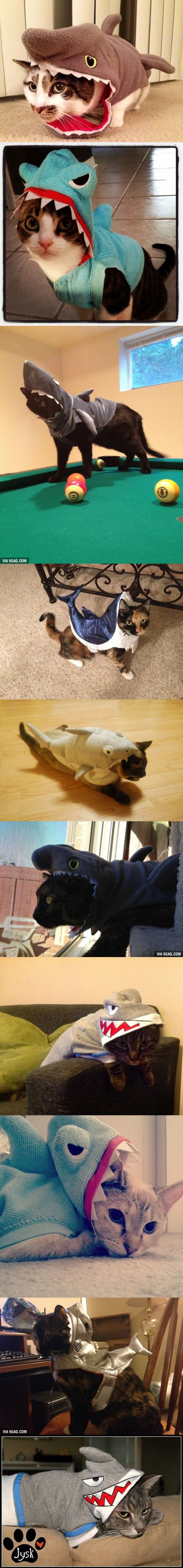 10 Cats In Shark Costumes...need to do this with Blackie and Lilly next halloween..@Alexa Oswald