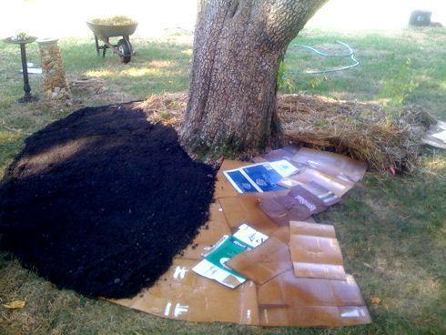 Lasagna Gardening Sheet Mulching Cardboard Then Soil