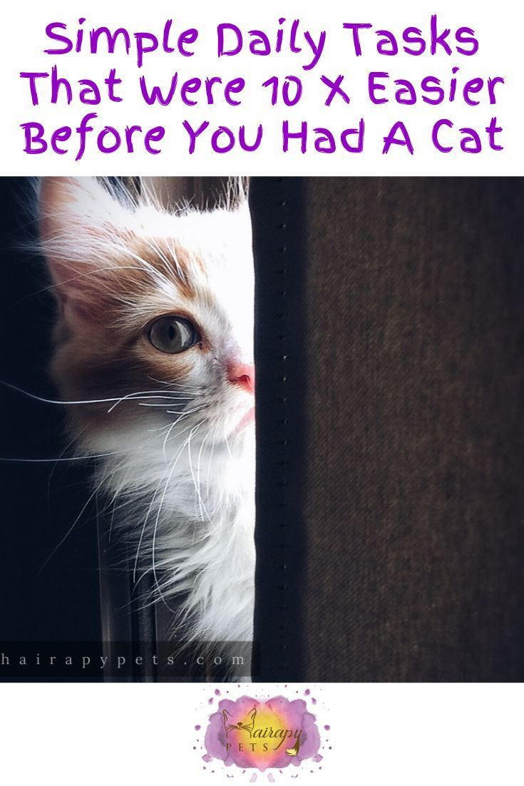 Simple Daily Tasks That Were 10x Easier Before You Had A Cat In 2020 Cats Cat Person Quotes Pet Memorial Gifts