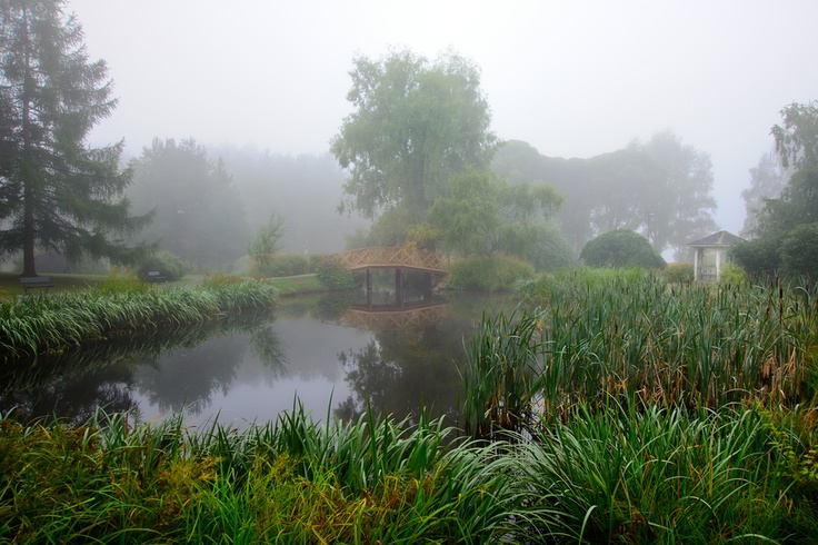 Misty Morning at Arboretum Tampere.