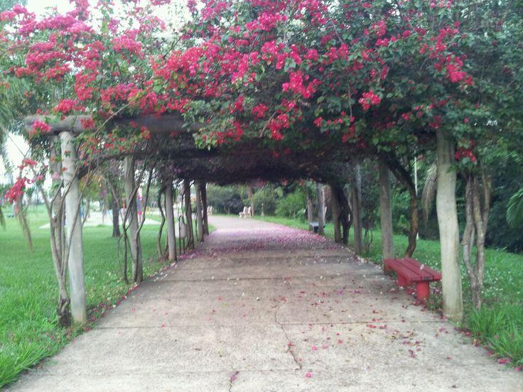 Parque Ecologico Boa Vista