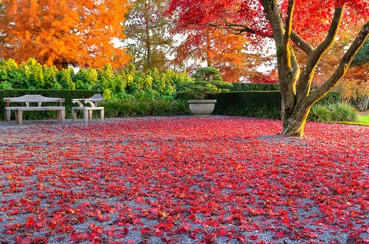 Enea Garden Baummuseum, Baumsammlung, Enzo Enea, Landscape architecture, Landschaftsarchitektur