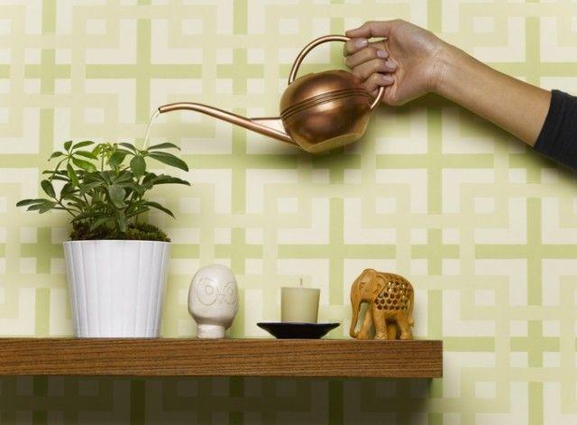 Совет для комнатных растений! 0