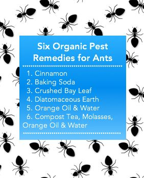 Do you have ants? Use these proven non-toxic, simple solutions to get rid of sugar, carpenter and fire ants. Click to read more and Pin to save for later.