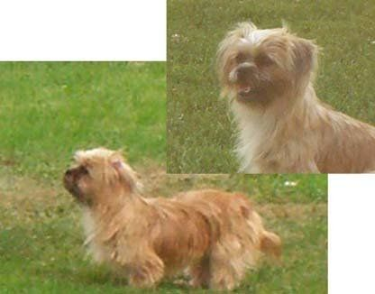 how to train a shorkie