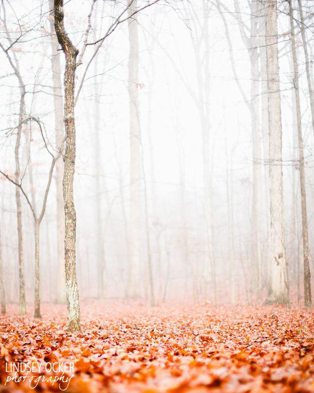 love-and-squalor:  Forest of fog, blanket of orange - Now for sale on Etsy