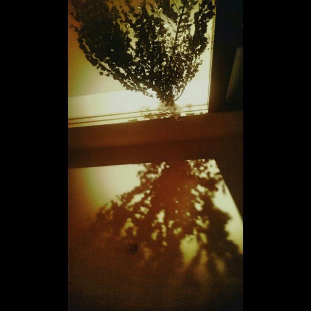 灯りの向こう側/影…などのインテリア実例 - 2015-06-13 16:19:37   RoomClip(ルームクリップ)