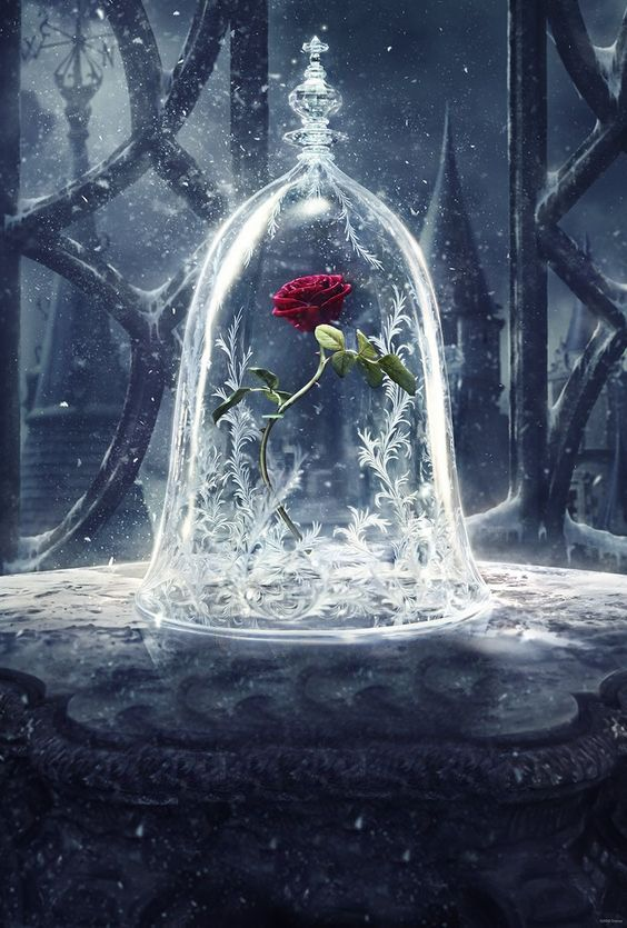 Enchanted Rose Drawing: 866 Best Beauty And The Beast Images On Pinterest