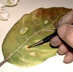 How to paint leaves, free watercolor art lesson