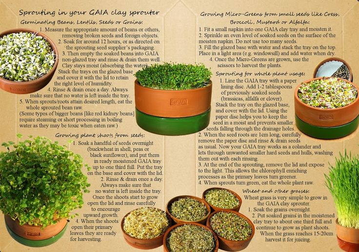 Sprouting instructions for the GAIA Clay Sprouter