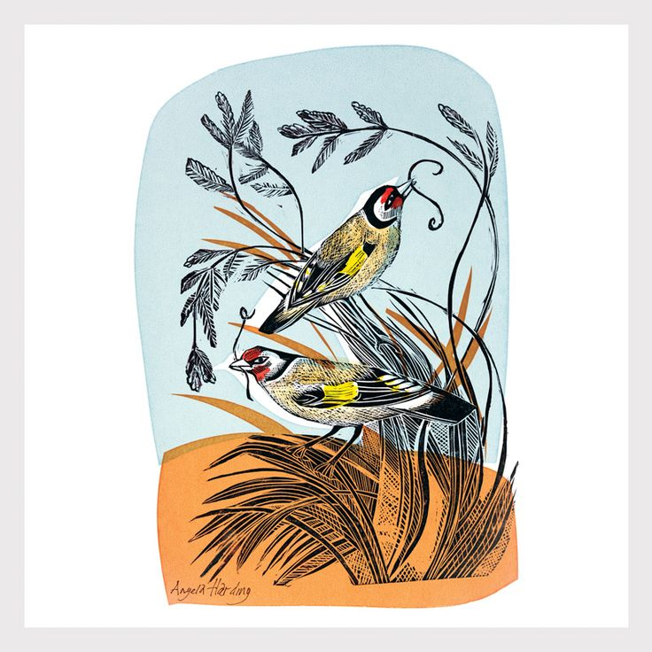Angela Harding, goldfinches, bird, printmaking, colour, design, pattern, llustration