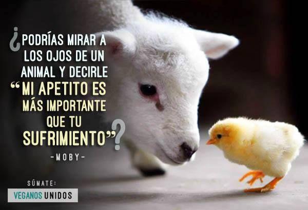 ¡Vuélvete vegano/a! - Go vegan!  #vegan #vegano #veganism #veganismo