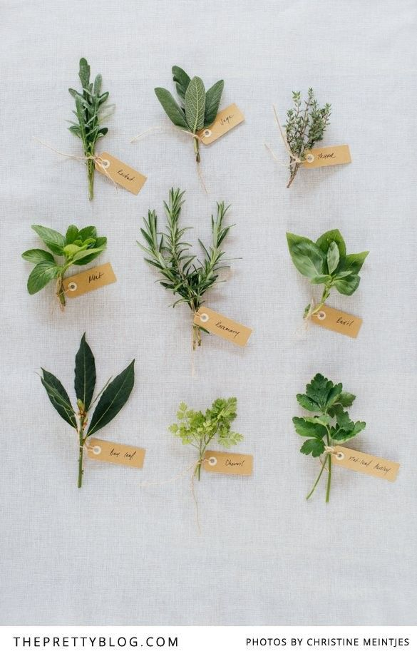Cooking with Herbs | Tips & Advice | The Pretty Blog