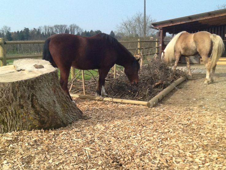 Knabbertheke (Schlade-Ranch) www.wir-bewegen-pferde.de