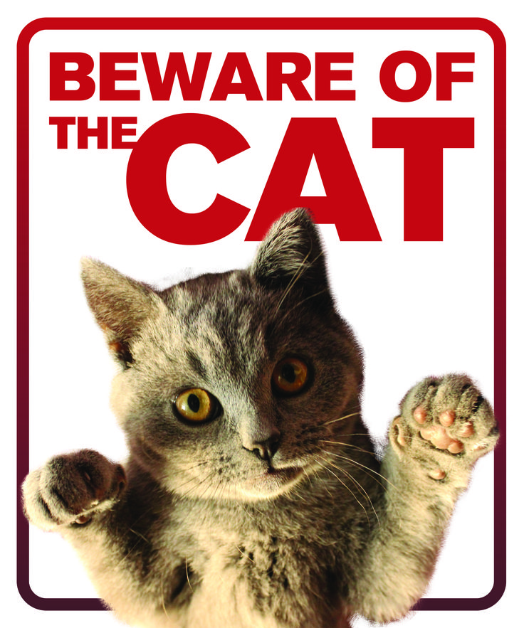Printed on High quality coroplast. Order with grommets for quick installation. Free shipping. #cat #sign #beware #funny