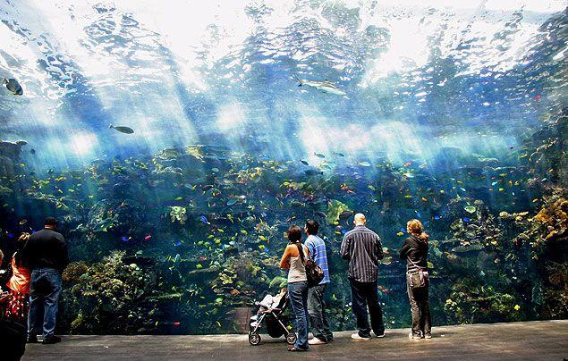 Imagem do aquário Georgia Aquarium, em Atlanta