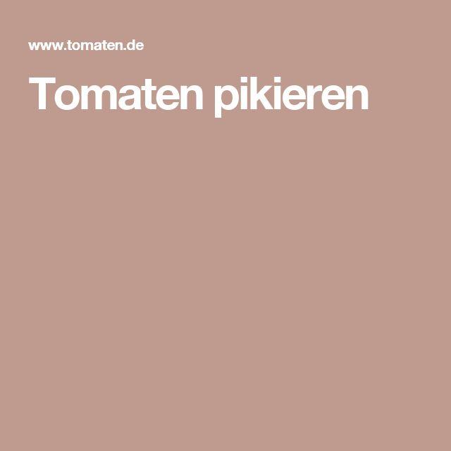 Tomaten pikieren