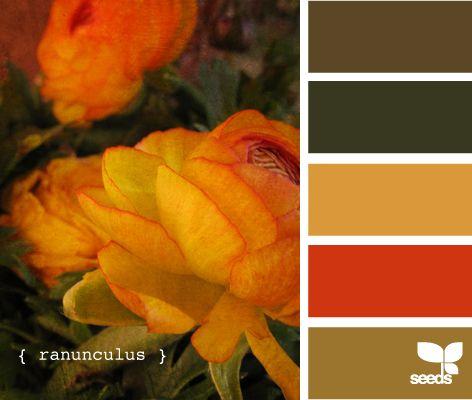 ranunculus (autumn)