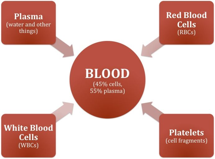 Blood Diagram  Basicblooddiagramjpg  Blood Plasma -8473