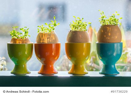 Kresse-Eier mit Kindern basteln  Kresse-Eier mit Kindern zu basteln, macht Spaß und lässt die Zeit bis zum Osterfest noch schneller vergehen und hat einen ganz besonderes Erfolgserlebnis für die Kinder, wenn dann kurzfristig die Kresse wächst.