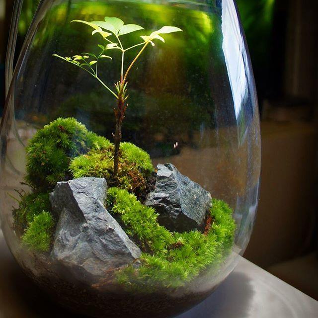 【mosslight1955】さんのInstagramをピンしています。 《#苔あかり #モスライト#mosslight #LED#Lighting#コケ#moss#terrarium #テラリウム#lamps#interiordesign#plants#観葉植物#苔#mossgarden#インテリア#こけ#苔テラリウム#mossterrarium#ボトルテラリウム#苔盆栽#コケリウム#mossarium#mossmeister#照明》