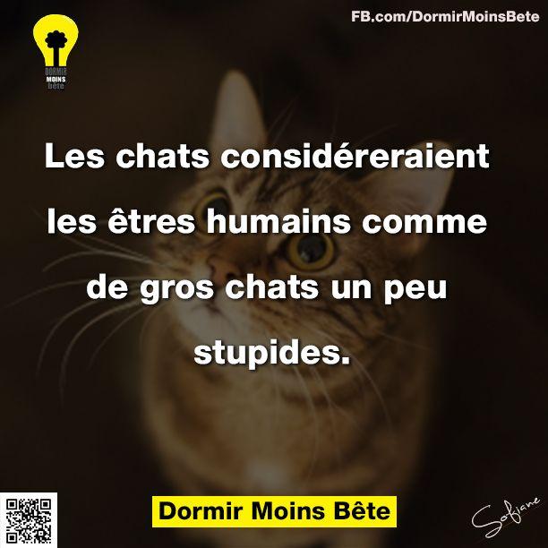 Les chats considéreraient les êtres humains comme de gros chats un peu stupides.