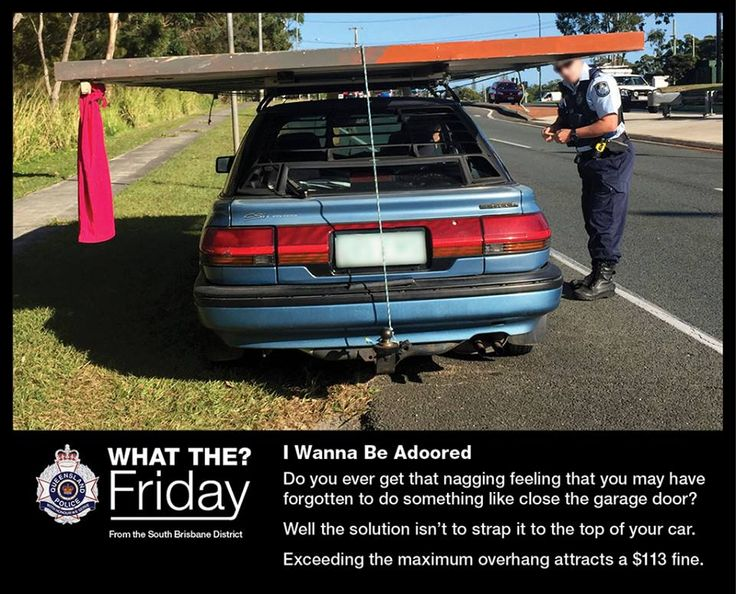 What The? Friday - Highlighting the bizarre things our officers see. I Wanna Be Adoored #WTFriday