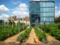 Seedstock | Sustainable Agriculture Blog | Sustainable Agriculture Startups | Sustainable Agriculture News | Urban Agriculture
