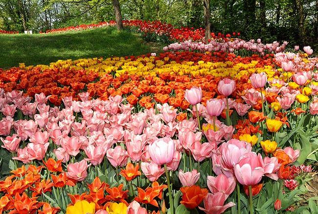 Pralormo garden, Italy, tulips