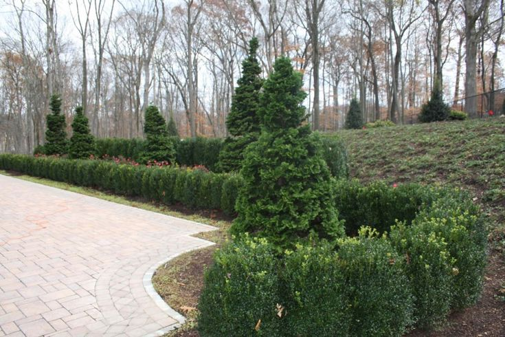 17 Best ideas about American Boxwood on Pinterest