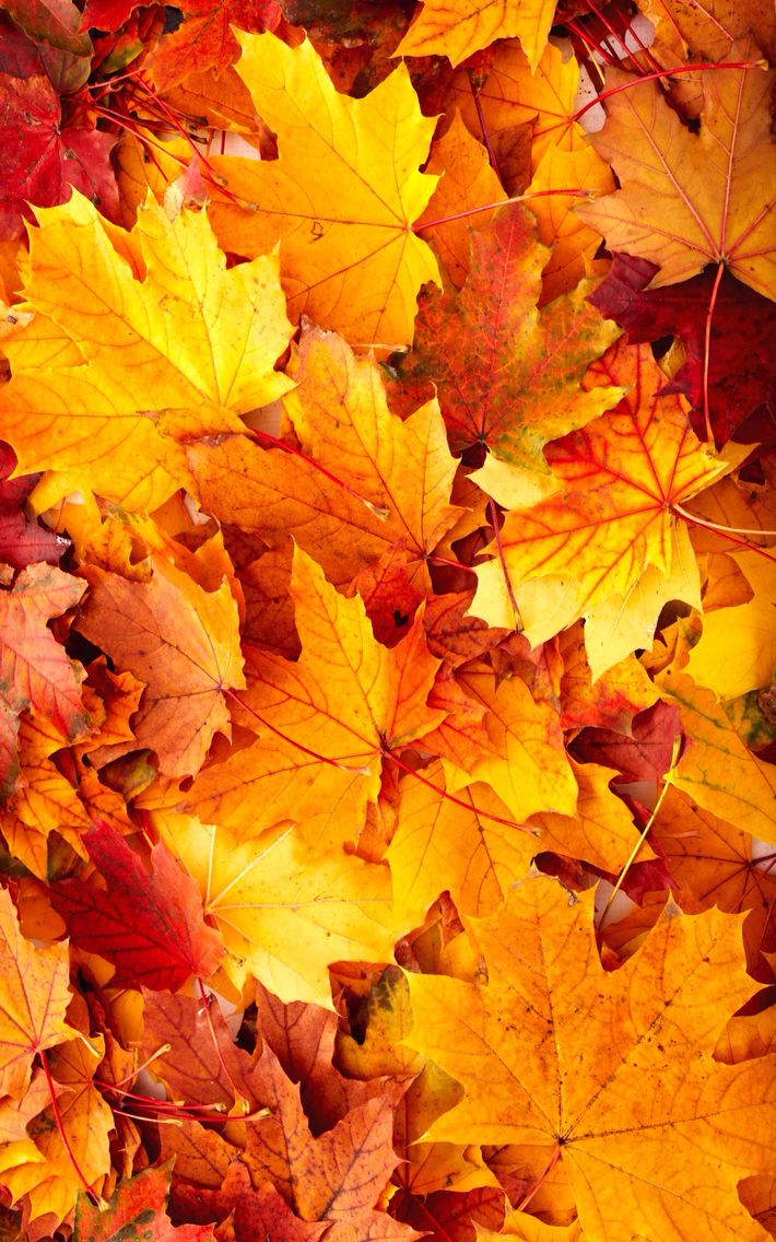 Cute fall wallpaper Autumn leaves wallpaper, Fall