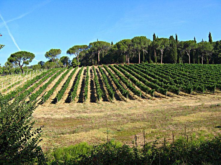 castelfiorentino08 Photo | Castelfiorentino - Tuscany Pictures & Photos