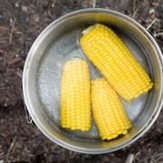 How to Steam Corn on the Cob Without a Steam Basket | LIVESTRONG.COM