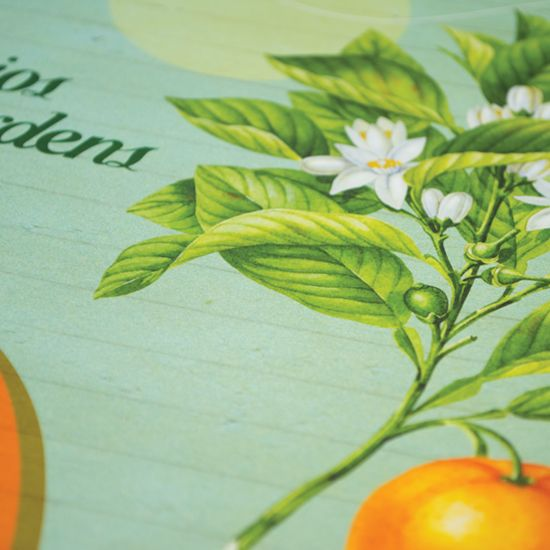 Chios Fruits_corporate brochure
