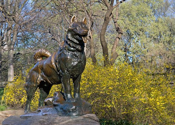 "Famous Animal Statues Across America - There are 10 wouldn't it be fun and a challenge to see them all over one summer!  Who says we are getting old.  This statue is ""Balto"" , if you don't know him rent the movie."
