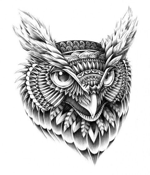 absolutely love this owl illustration