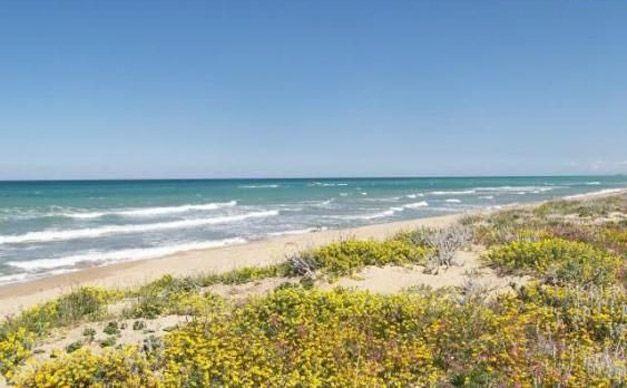 La meravigliosa spiaggia di Petacciato | Molisiamo