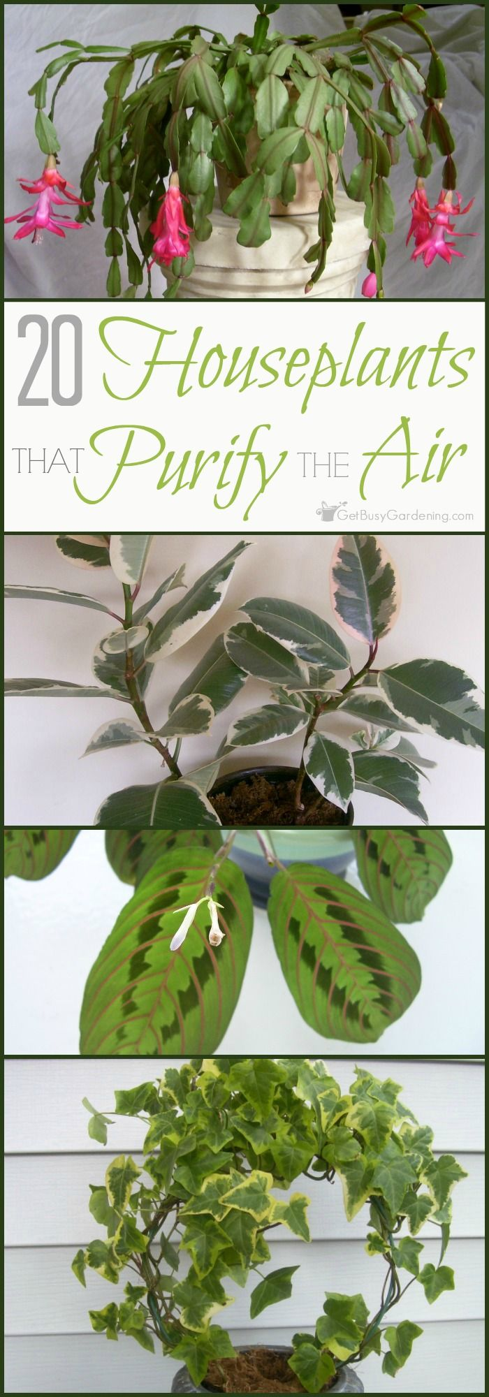 Plants are fantastic natural air filters, but some are better at cleaning the air than others. Here's a list of 20 of the best plants for indoor air.