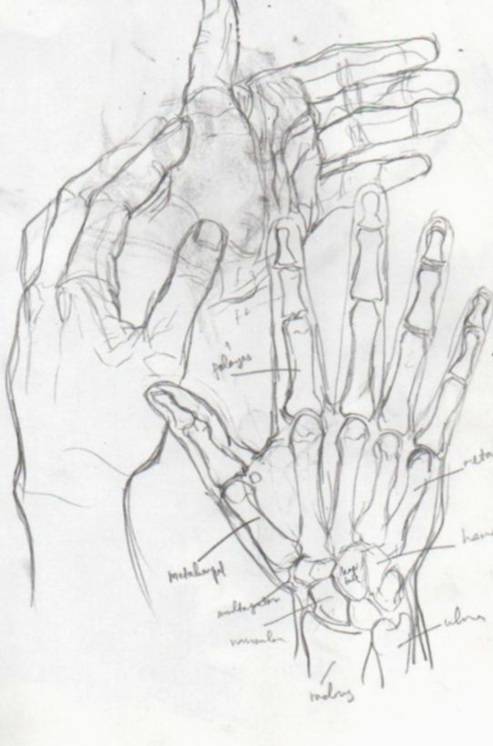 19+ Anime Sketch Body Anatomy in 2020 | Sketches, Anatomy ...