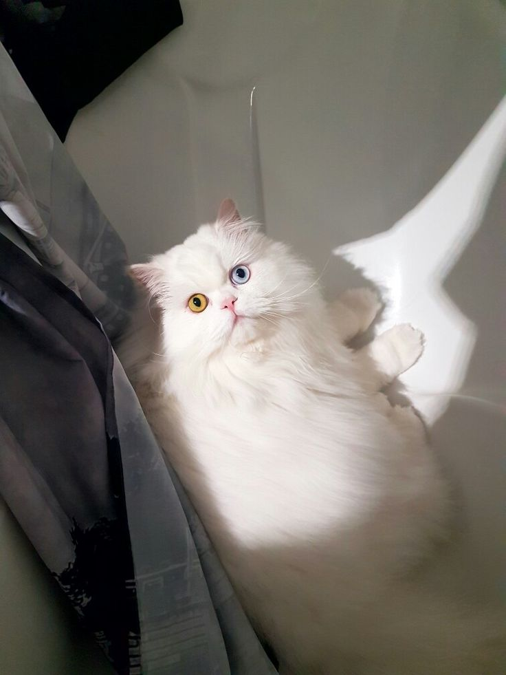 """""""Hey...  eu estava no banho....importas te de fechar a cortina?"""""""