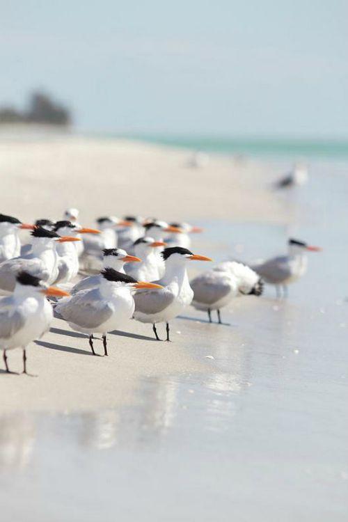Les véritables maîtres de la plage