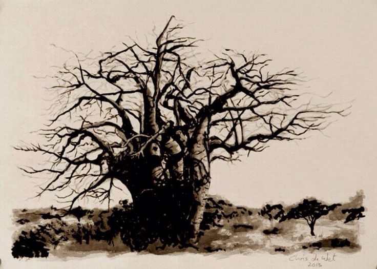 Baobab Tree - Ink on Fabriano