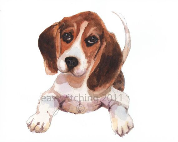 Beagle Watercolor Print  Chocolate eyed BEAGLE  by eastwitching, $16.00