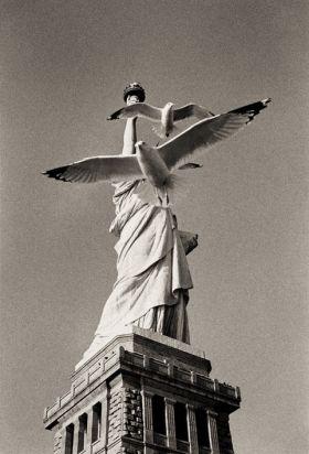 Mouettes de la liberté - Robin Santus