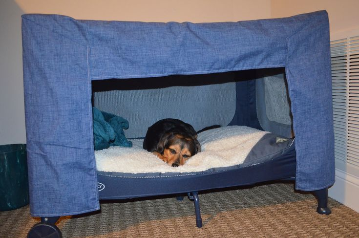Dog Bed Made From Kid S Pack N Play For My Sweet Sofie