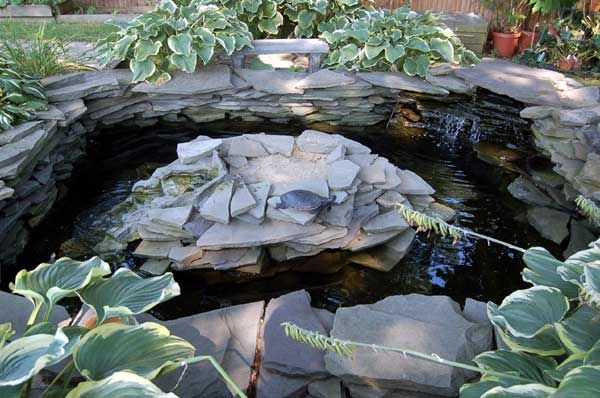 Turtle Pond Envy Turtle Pond Turtle And Backyard