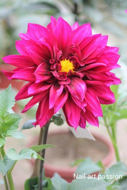 #Pretty_flower_photography